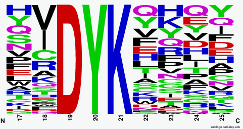 FLAG-M1 motif